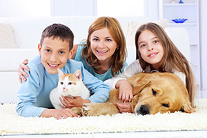 remove-pet-odours-in-carpet